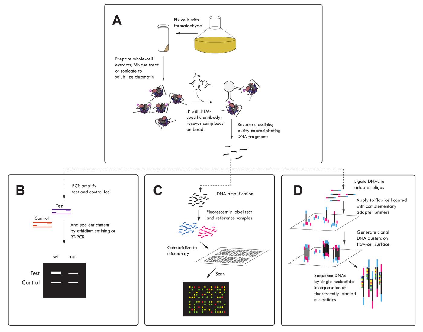 Histone Modification